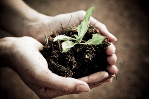 כל הטיפים להובלת צמחים